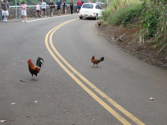 Why_did_the_chicken_cross_the_road-